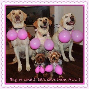 Five dogs with pink balloons