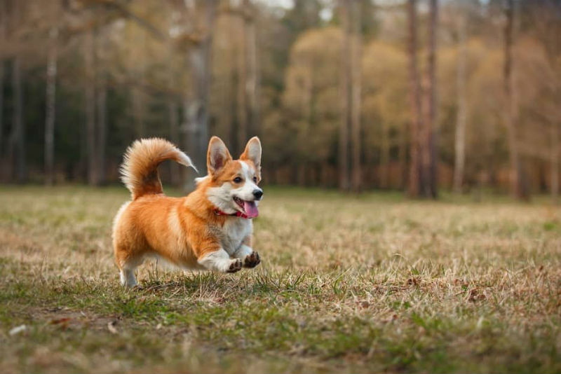 What to look for as your pets get older
