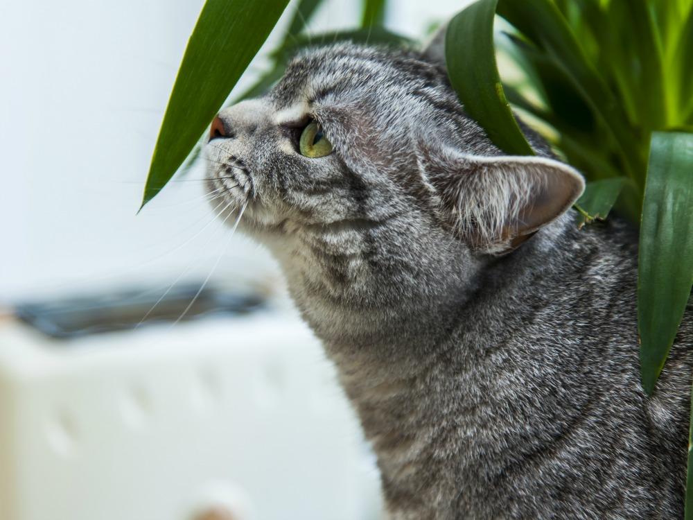 cat leaf