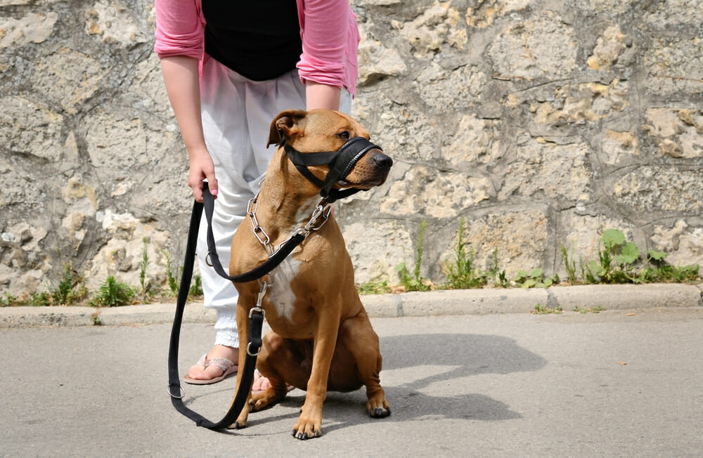 Dog with a muzzle and a leash held by its owner